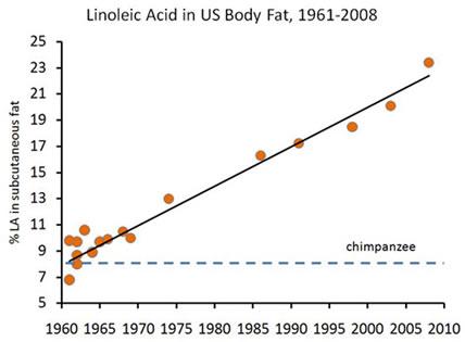 linoleic-acid-in-body-fatx