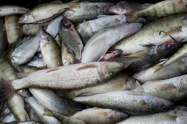 12 Contaminated Fish You Should Never Eat