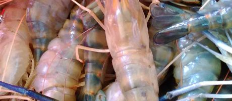 Are Your Shrimp Toxic?