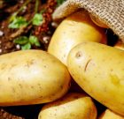 Fried Potatoes Linked To Early Death?